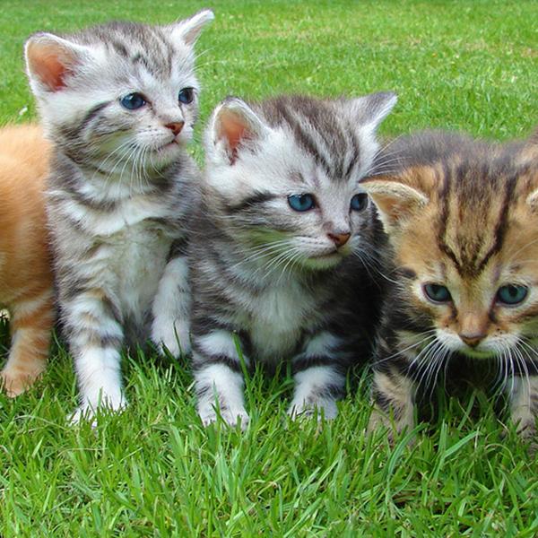 Ons kittenbeleid