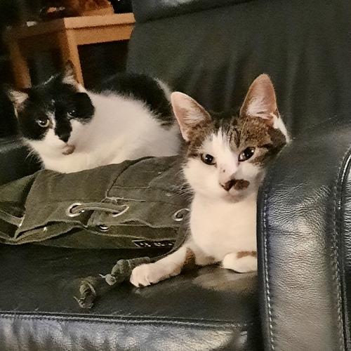 Stella en Homie
