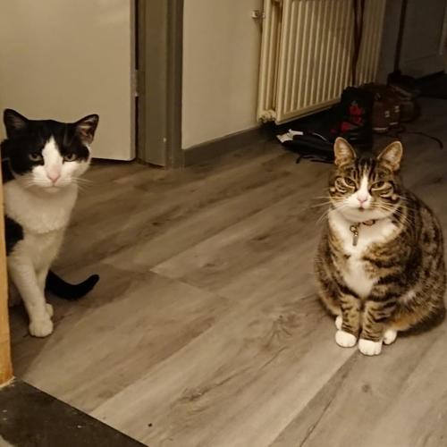 Loki (eerst Pablo) en Fudge