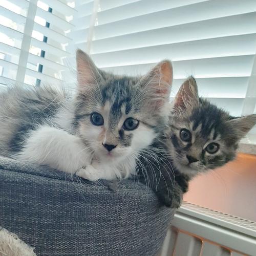 Pip en Sis