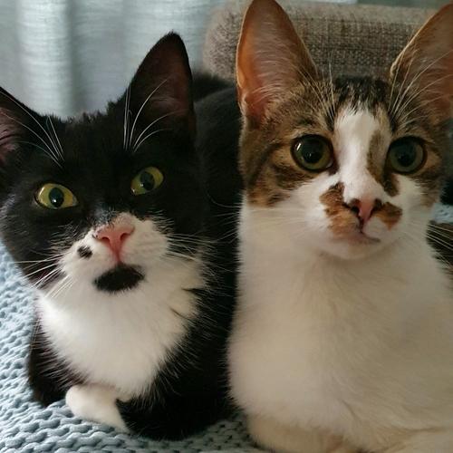 Bella en  Boef
