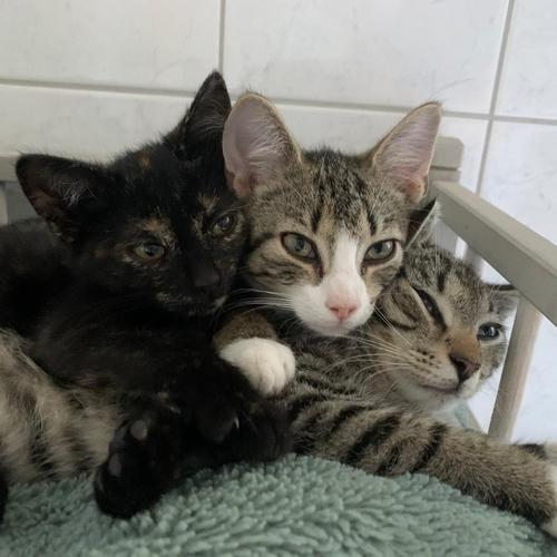 3 kittens (deel 2)