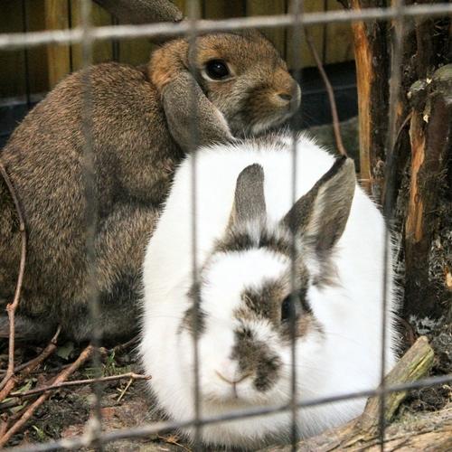 Kris (vh konijn 1) en Tess