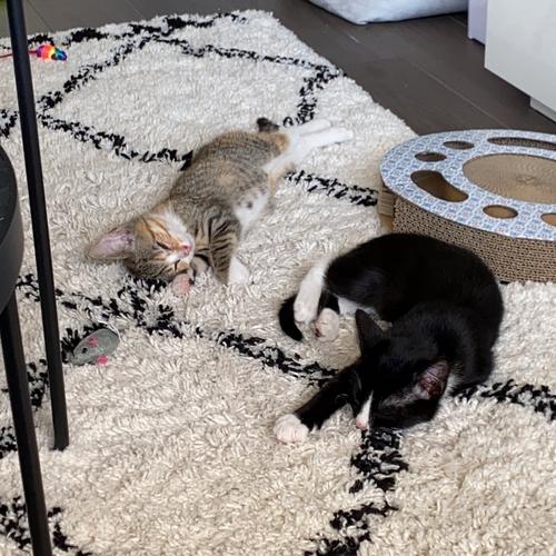 Pippi en Vito