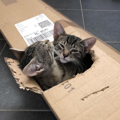 Mojo en Kitty