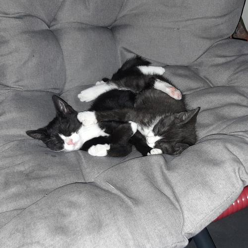 Kittens Yeaga en Monsh