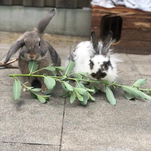 Frits (vh konijn 2) en Sammie