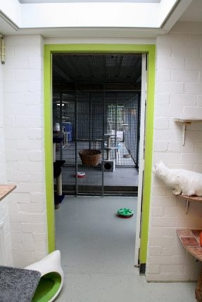 Kattenkamer 4, binnen, Dierenasiel Goes