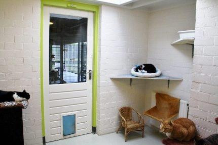 Kattenkamer 3, binnen, Dierenasiel Goes